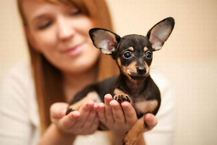 The Dachshund is the smallest hunting breeds.
