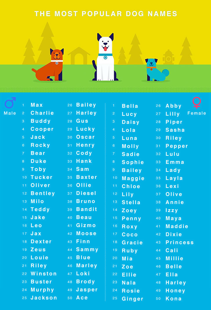 top 50 popular male and female dog names
