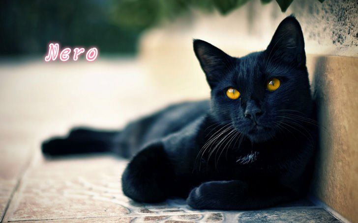 Nero, the black cat
