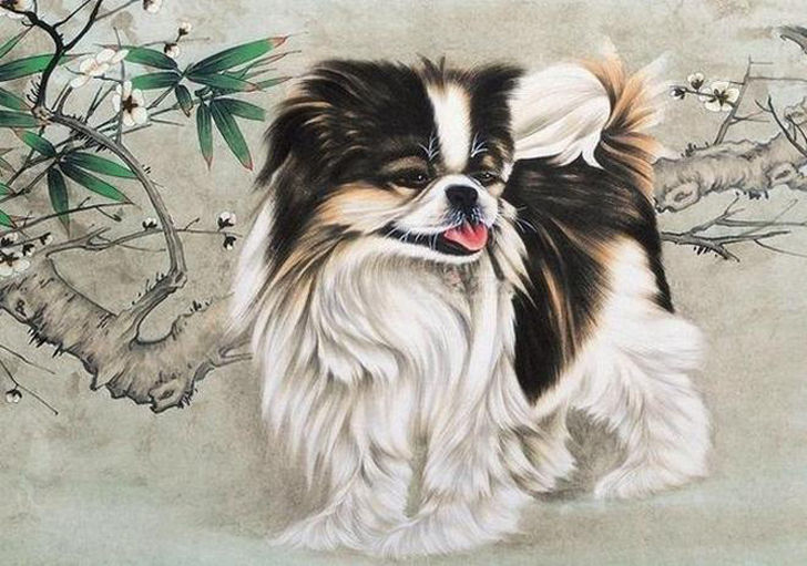 Uncommon Chinese Dog Breeds