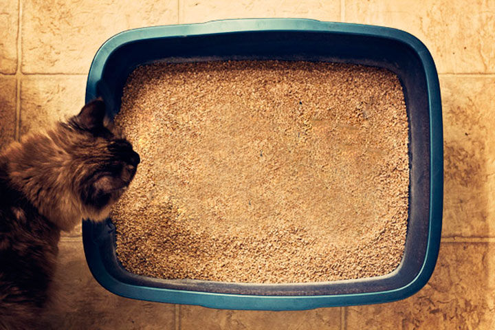 If you have more than one cat, you should add another litter tray, because it's possible there may be territorial disputes between the two. Place another box in a different location.
