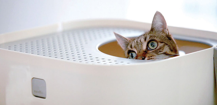 Retraining your cat to use litter box when the environment changes.