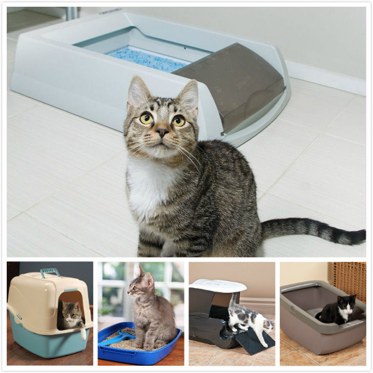 Make sure the litter box is in a safe and an accessible place for your cat.