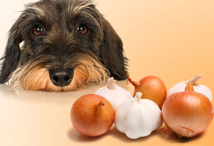 Onions and garlic contain compounds that can be harmful to dogs if ingested enough