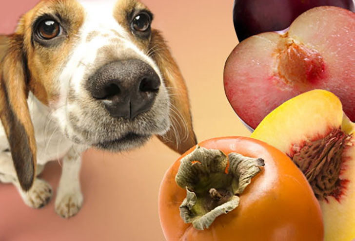 Be careful not to leave apple pits or cores laying around for dogs to get their paws on.