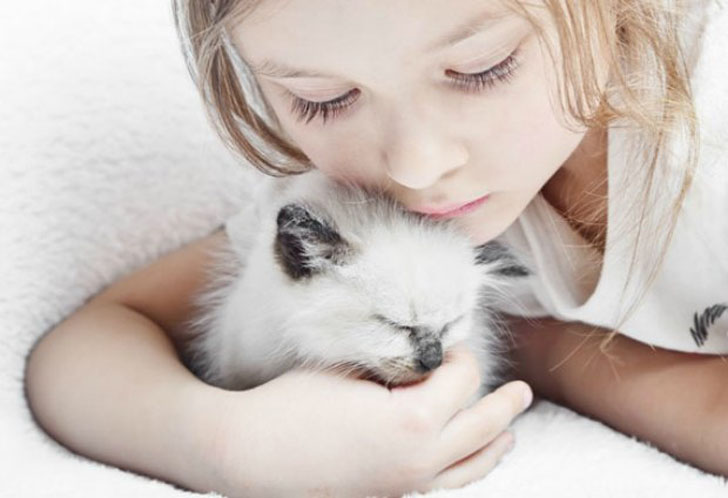 5 cat breeds that  could be the best friends with your kids.