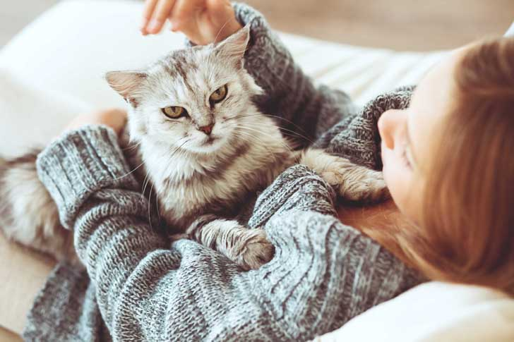 Top five cat breeds that are mostly suitable to be kept in an apartment for you.