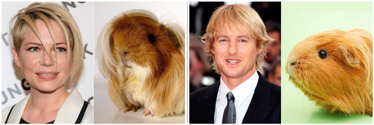 guinea-pig-names-inspired-by-celebrities
