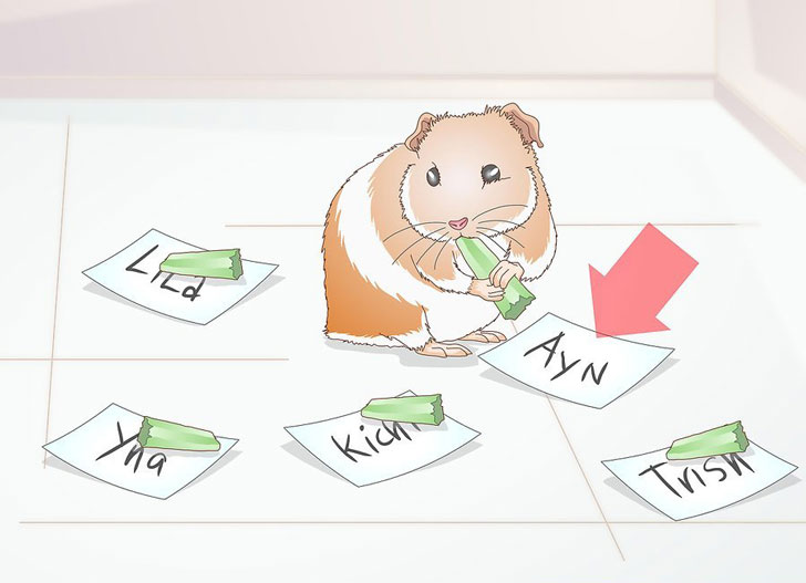 Use index cards to let your guinea pig choose his name.