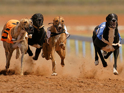 10 Dog Breeds That Are Faster Than Usain Bolt