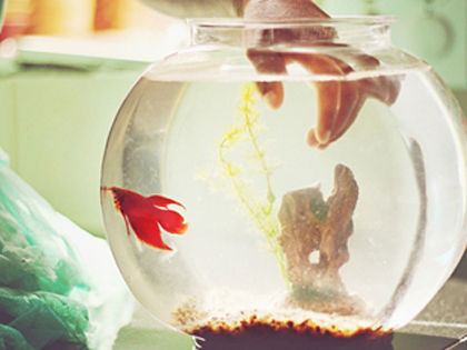10-freshwater-aquarium-fish-that-anyone-can-keep-alive