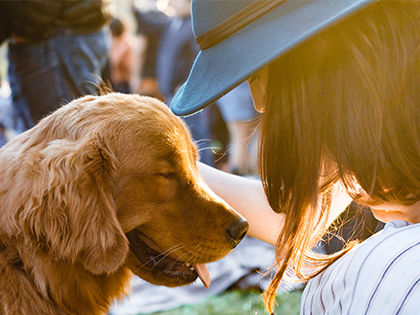 10-of-the-most-loyal-dog-breeds-the-faithful-companion-youve-always-needed