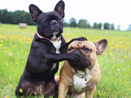 12-quiet-dog-breeds-that-are-perfect-roommates-for-you
