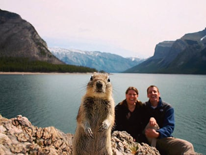 15 Animal Photobombs That Couldn't Have Been Timed Better
