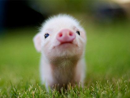20-adorable-moments-of-baby-animals-that-will-brighten-your-day