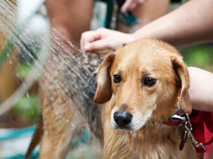 experts-answer-how-often-should-you-bathe-your-dog