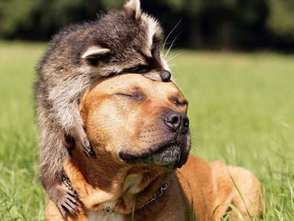 Funny Raccoon Pics Show 16 Signs That You've Met the Right Person