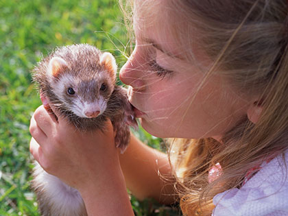 thinking-of-getting-an-exotic-pet-these-7-easy-care-pets-are-potentially-good-choices