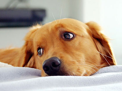 Why Does A Dog Keep Whining? What Is He Trying To Tell You?