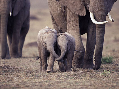 world-elephant-day-16-life-lessons-we-can-learn-from-elephants