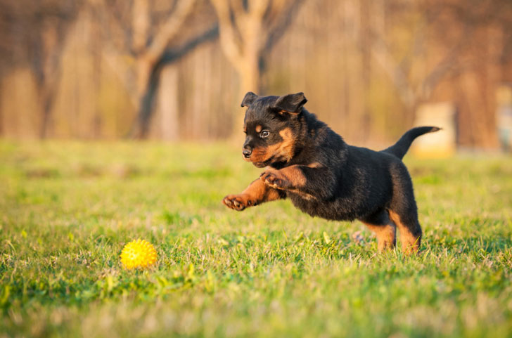 10-popular-dog-breeds-with-the-most-health-issues_3