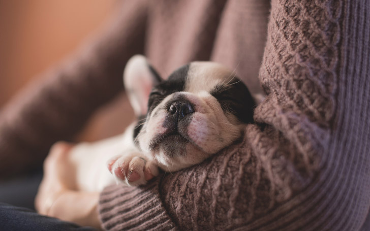 12-quiet-dog-breeds-that-are-perfect-roommates-for-you_7