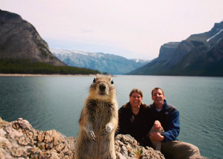 15-animal-photobombs-that-couldnt-have-been-timed-better_1