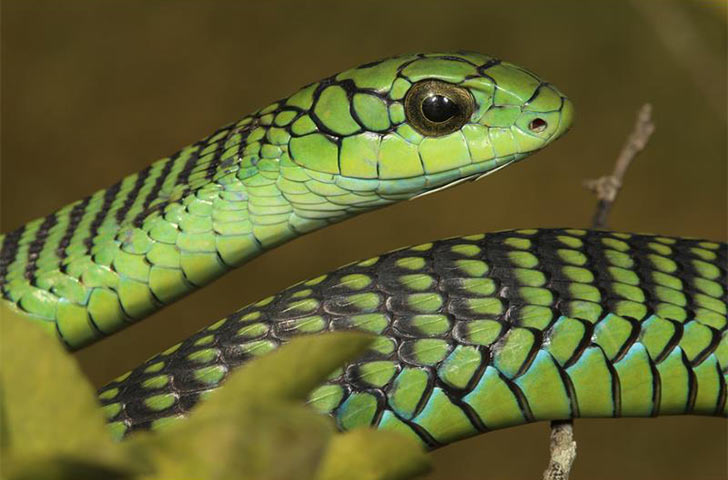 15-deadliest-snakes-on-earth_1