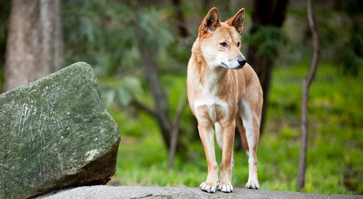 15-longest-living-dog-breeds-you-wont-believe-how-long-the-oldest-one-lives_2