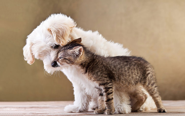 15-most-cat-friendly-dog-breeds-that-make-the-best-cat-companion_11