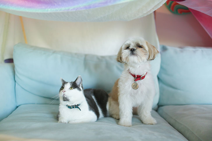 15-most-cat-friendly-dog-breeds-that-make-the-best-cat-companion_13