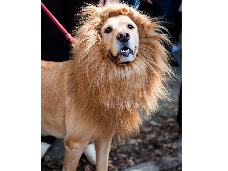 16-funny-dog-costumes-that-will-win-halloween_1