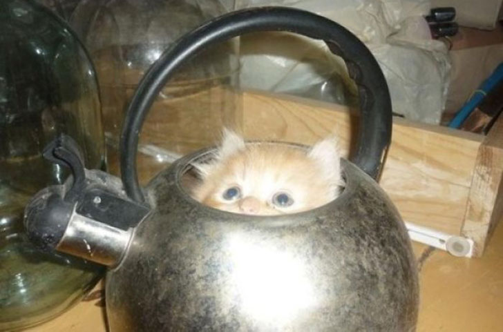 21-funny-pics-that-prove-cats-dont-need-beds_12