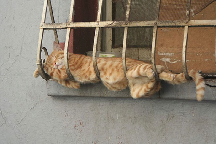 21-funny-pics-that-prove-cats-dont-need-beds_18