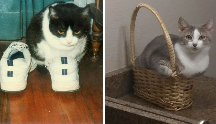 21-funny-pics-that-prove-cats-dont-need-beds_22