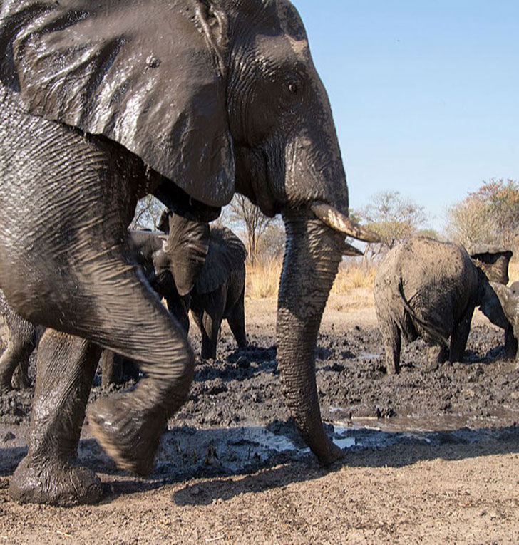 a-baby-elephant-was-abandoned-by-its-herd-see-what-saved-him_12