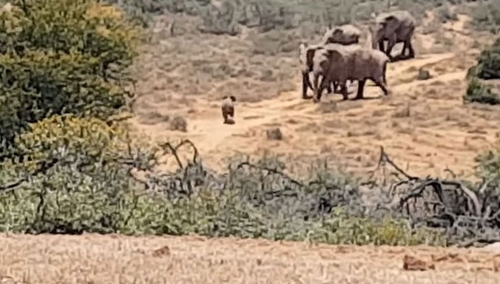 a-baby-elephant-was-abandoned-by-its-herd-see-what-saved-him_13