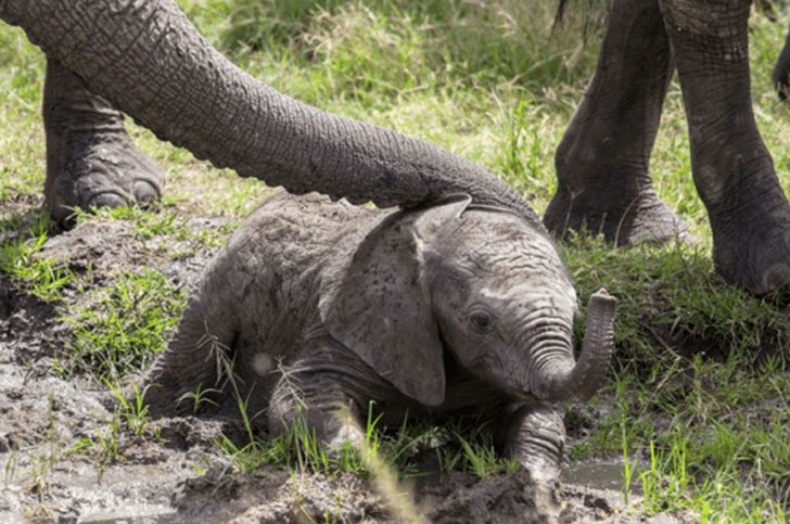 a-baby-elephant-was-abandoned-by-its-herd-see-what-saved-him_2