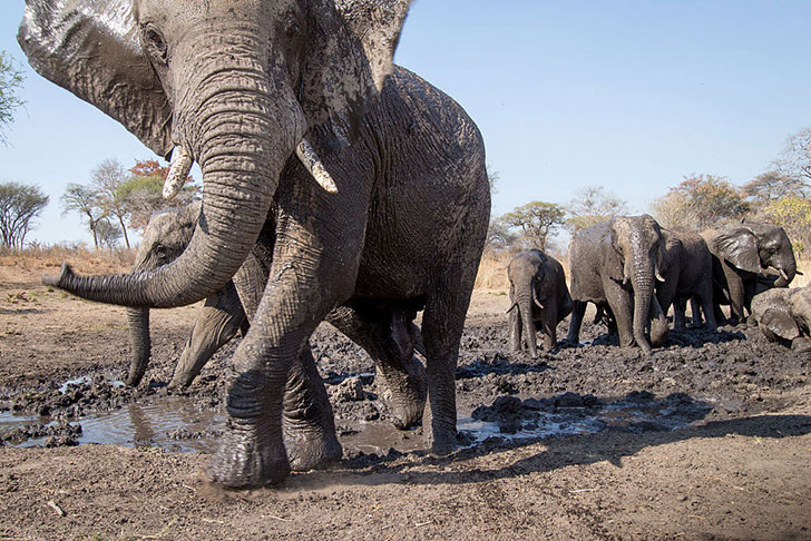a-baby-elephant-was-abandoned-by-its-herd-see-what-saved-him_3
