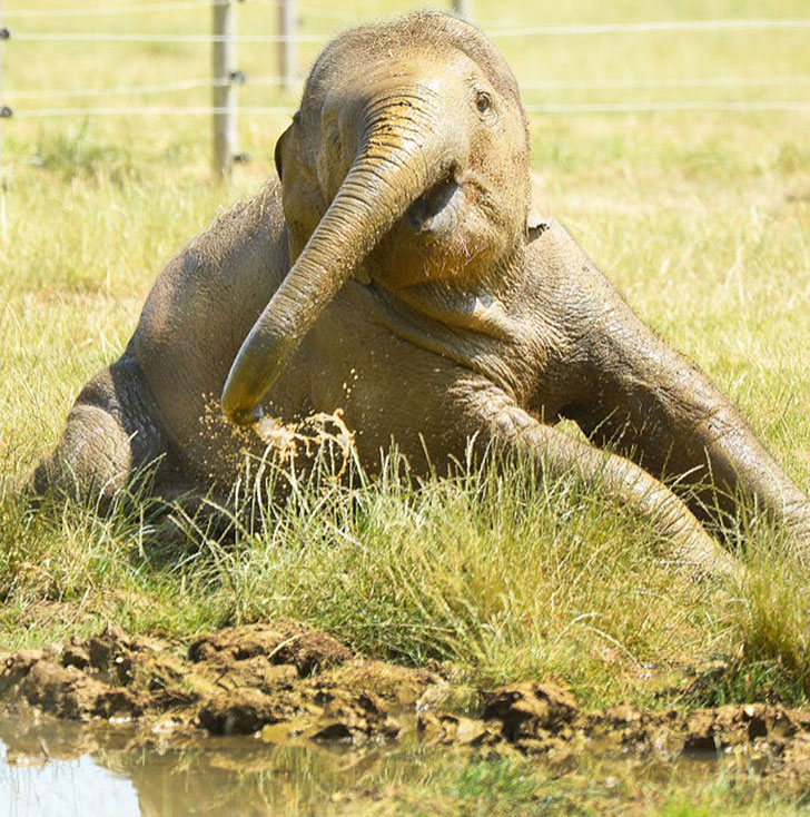 a-baby-elephant-was-abandoned-by-its-herd-see-what-saved-him_7