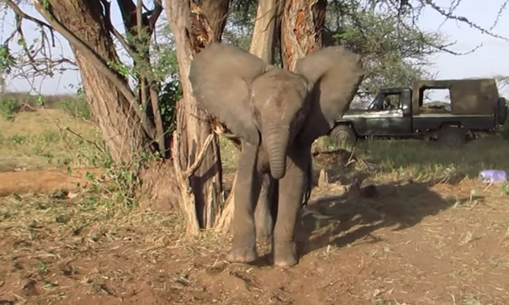 a-baby-elephant-was-abandoned-by-its-herd-see-what-saved-him_8
