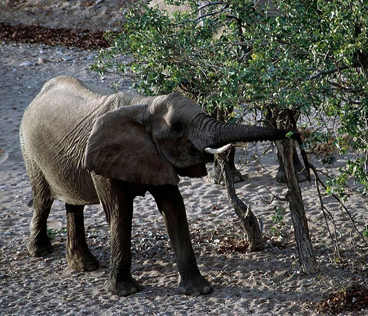 a-baby-elephant-was-abandoned-by-its-herd-see-what-saved-him_9