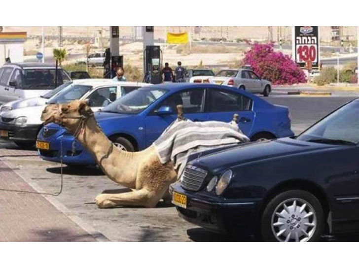 land-of-the-rich-15-crazy-things-that-you-only-see-in-dubai_6