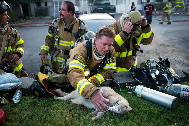 puppies-rescued-by-firefighters-arent-actually-dogs_4