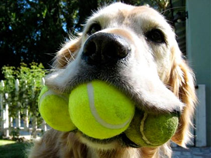 15 Incredible Dogs Who Hold Impressive World Records