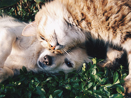 15 Most Cat-Friendly Dog Breeds That Make The Best Cat Companion