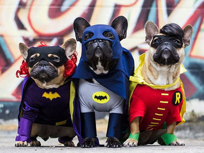 16 Funny Dog Costumes That Will Win Halloween