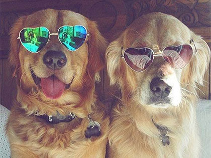 16 Reasons Why Golden Retrievers Are Better Than Your Boyfriend