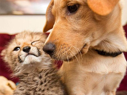 16 Unlikely Animal Friendships That Show Us Differences Don't Matter