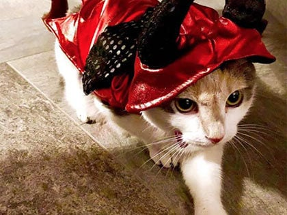 18 Cool Costumes For Cats That Will Win Halloween